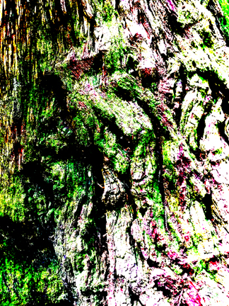 CoastRedwoodTexture-2-post-lo