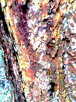 PineBarkTexture-2-post-lo