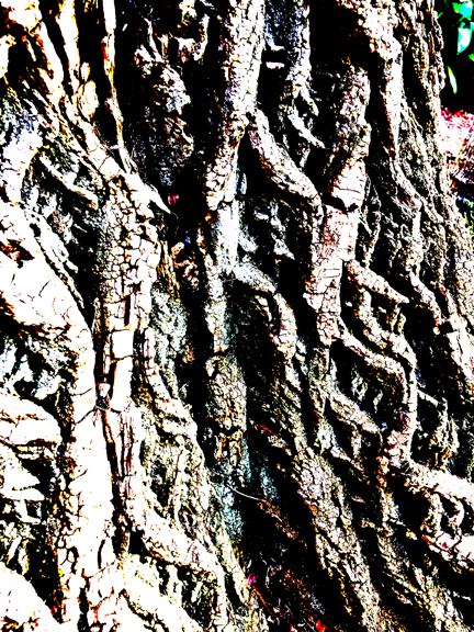 TreeBarkTexture-2-post-lo